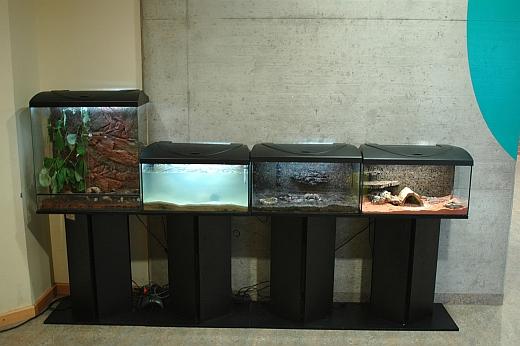 Momentan Gibt Es Auch In Jedem Behalter Etwas Lebendes Zu Entdecken Im Aquarium Mit Den Urzeitkrebsen Triops Schwimmen Nun Nach Der Trockenphase Wieder Ein